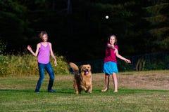 追逐球的狗 免版税库存图片