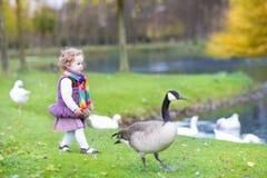 追逐野生鹅的小孩女孩在湖在秋天公园 免版税库存照片