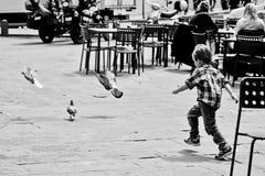 追逐鸽子的男孩 免版税库存图片