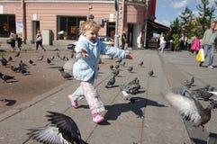 追逐鸽子 免版税库存照片