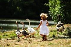 追逐鹅女孩 库存图片