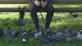 退休的公哺养的鸽子在公园,坐的长凳,退休金休闲,狂放的生活 影视素材