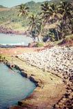 退出Anjuna使低潮的全景靠岸与白色湿沙子和绿色可可椰子,果阿,印度 免版税库存照片