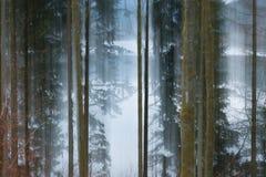 退色的森林 免版税库存图片