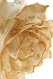 退色的玫瑰垂直 免版税库存照片