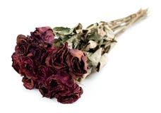 退色的死玫瑰色花束被隔绝反对白色 免版税库存图片