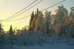 送电线导线在一块沼地的在冬天积雪的森林里 图库摄影