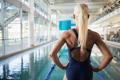 适合女性游泳者背面图由水池有空的中心的 库存照片