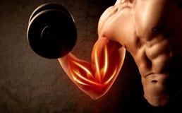适合的与红色肌肉概念的爱好健美者举的重量 免版税库存图片