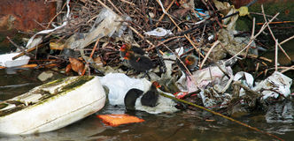 适应鸟污染 免版税库存图片