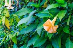 适当花和树在庭院里 图库摄影
