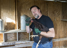 适用于疗程的农夫自由放养的鸡梳子  库存照片