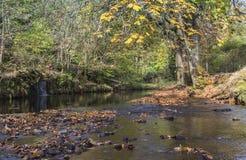 逆流垫脚石的河在Uppermill 库存照片