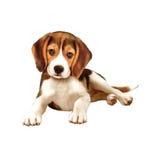 选址在白色的小猎犬小狗 免版税库存照片