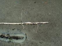 选拔与死的树皮的死的树枝在水中, a 免版税库存照片