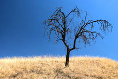 选拔在一个干燥风景的被烧的树 免版税库存图片