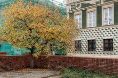 选拔在围场的金黄树在老镇的廉价公寓之间 库存图片