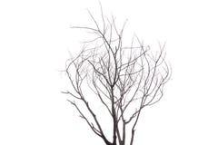 选拔在白色背景隔绝的老和死的树 库存照片