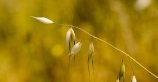 选拔干野生植物 库存图片