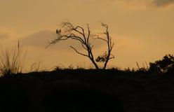 选拔扭转的树 免版税库存照片
