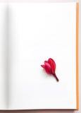 选拔空位纸张和红色杏仁奶油饼花 免版税库存图片