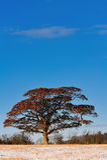 选拔结构树 免版税库存图片