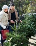 选择圣诞树的夫妇 图库摄影