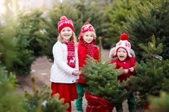 选择圣诞树的孩子 Xmas礼物购物 免版税库存照片