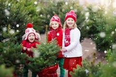 选择圣诞树的孩子 Xmas礼物购物 免版税库存图片