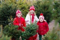 选择圣诞树的孩子 Xmas礼物购物 库存图片