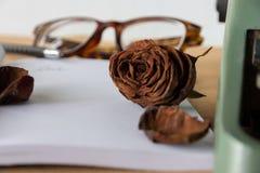 选择聚焦凋枯了在空白的白皮书的老棕色玫瑰 免版税库存图片