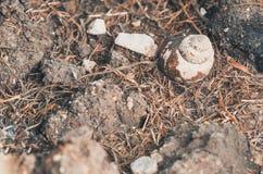 选择聚焦蜗牛在公园 图库摄影
