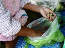 选择莲花种子的客商为包装 免版税库存图片