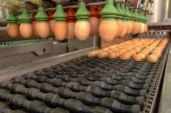 选择过程和分级的生产线蛋工厂 免版税库存图片