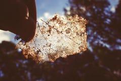透亮秋天叶子在公园背景的一只手上 免版税库存图片