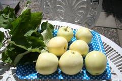 透明布兰奇苹果-可口夏天的苹果非常甜和 免版税库存照片