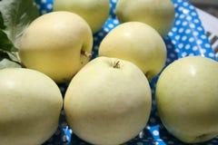 透明布兰奇苹果-可口夏天的苹果非常甜和 免版税图库摄影
