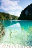 透明的水壮观的看法与鱼的在克罗地亚 库存照片