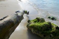 透明的波浪,委内瑞拉海滩 免版税图库摄影