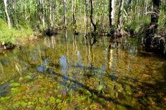 透明的流动的森林小河 免版税库存图片