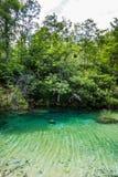 透明的湖在森林 Plitvice,国立公园,克罗地亚 库存照片