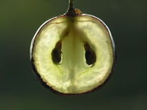 透明的葡萄 库存照片