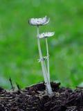 透明的蘑菇绿色后面groundsky 免版税库存照片