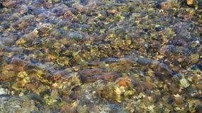 透明的水背景 库存照片