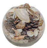 透明碗、花瓶充满海壳和杉木锥体,被隔绝的,白色背景 免版税库存照片