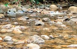 透明水在有黄色石头的河 免版税库存图片