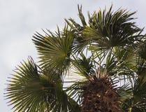从透视下面的棕榈树午间 库存照片