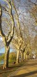 透视树型视图 免版税库存图片