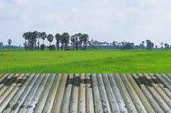 透视竹子木设计自然领域绿色背景 免版税库存图片
