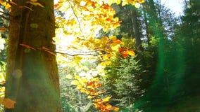 透镜火光在秋天森林里